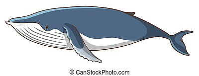 Whale on white background