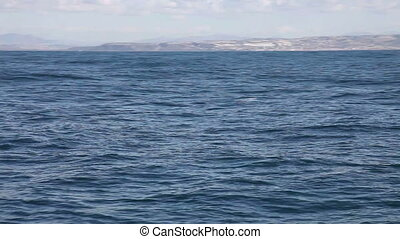 Whale watching off coast San Diego