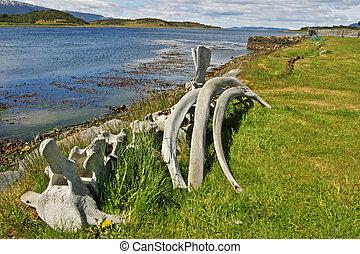 Whalebones in Tierra del Fuego - Whalebones by Beagle ...