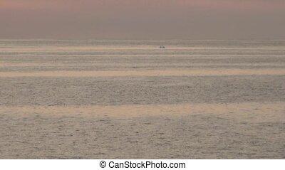 Whales in Antarctica - Antarctic Peninsula - Palmer Archipelago - Neumayer Channel - Global Warming