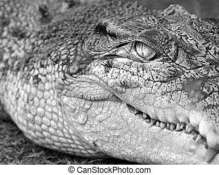 what a croc