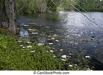 What a Mess! - Trash from runoff accumulated in a small lake...
