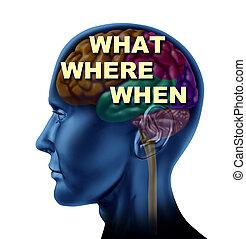 What Where When Decision - Brain what where when decision...