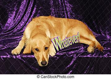 Whatever Golden