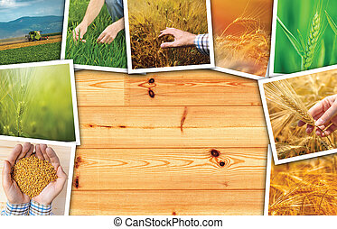 Wheat agriculture photo collage