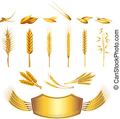 wheat and cereals vector set - wheat and cereals photo...