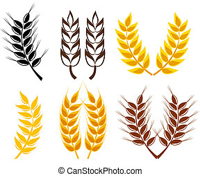Set of cereal ears - wheat and rye symbols. Vector illustration