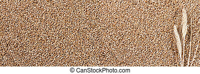 Wheat background with ears