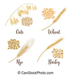 Wheat, barley, oat and rye. Cereals 3d icon vector set. Four cereals grains and ears. Harvest time seeds and plants. Can be used for cooking, bakery, tags, labels, textile