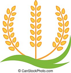 Wheat barley spike yellow isolated on white background.