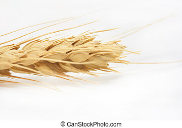 Wheat close-up on a white background
