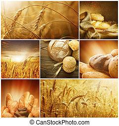 wheat., colheita, concepts., cereal, colagem