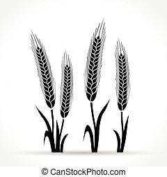wheat design on white background
