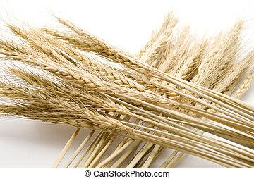 Wheat ear   - Wheat ear on white background