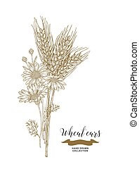 Wheat ears and chamomiles bouquet. Hand drawn vector illustration vintage.