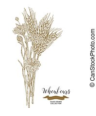 Wheat ears and cornflowers bouquet. Hand drawn vector illustration vintage.