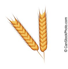wheat ears barley design isolated