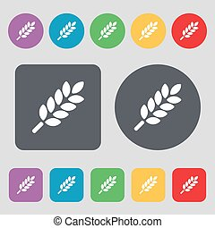 Wheat Ears Icon sign. A set of 12 colored buttons. Flat design. Vector