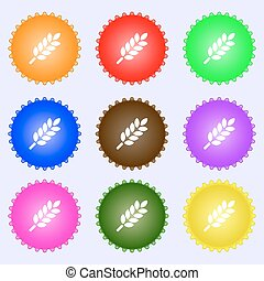 Wheat Ears Icon sign. Big set of colorful, diverse, high-quality buttons. Vector