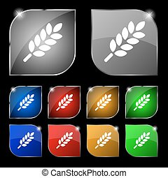 Wheat Ears Icon sign. Set of ten colorful buttons with glare. Vector