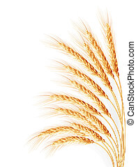Wheat ears isolated on the white background