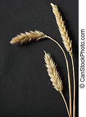 Wheat ears on black background
