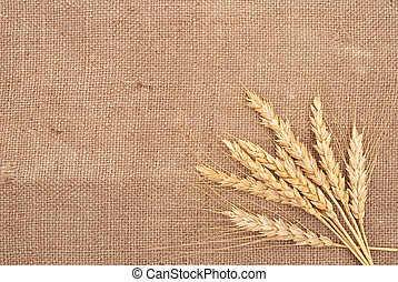 Wheat ears on burlap background
