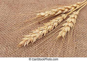 Wheat ears on burlap background
