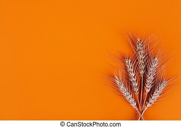 Wheat ears on colored table close up