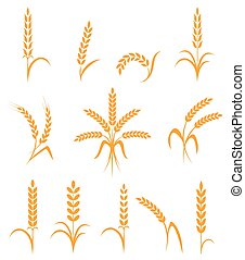 Wheat ears or rice icons set. Agricultural symbols isolated ...
