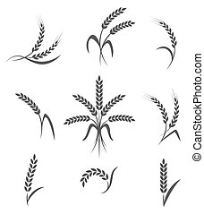 Wheat ears or rice icons set. Agricultural symbols isolated...