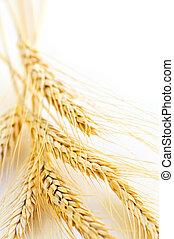Wheat ears
