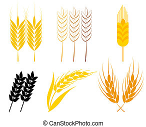 Wheat ears - Set of cereal ears - wheat and rye symbols....