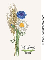 Wheat ears with chamomile and cornflowers. Rustic bouquet plants of fields. Hand drawn vector illustration.