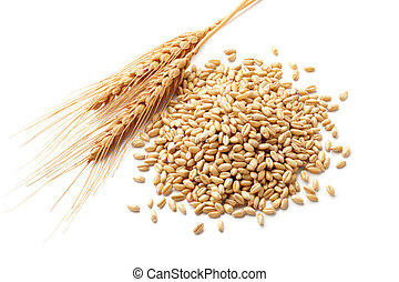 wheat ears (triticum) and wheat kernels isolated on white