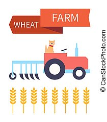 Wheat farm poster with dog in tractor and plough. Ear of wheaten farming crops and grain for baking food. Plant harvesting with automobile help vector
