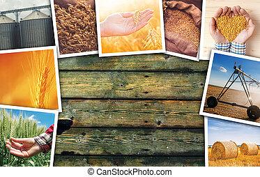 Wheat farming photo collage