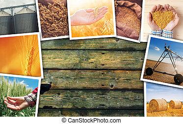 Wheat farming photo collage