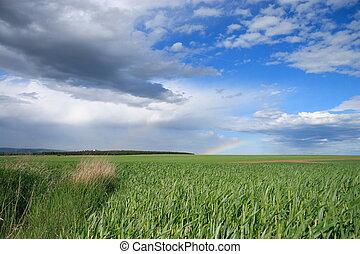 Wheat field.