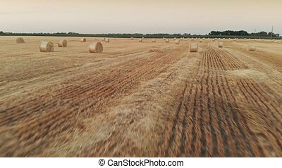 Wheat field after a harvest - Twisted haystack on...