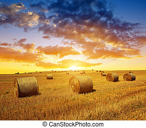 Wheat field after harvest with straw bales