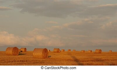 Wheat field after harvest with straw bales at sunset.