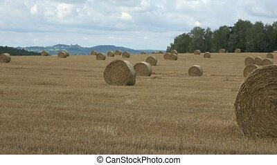 Wheat field after harvest with straw bales. Row of straw bales on the field. Agricultural landscape.