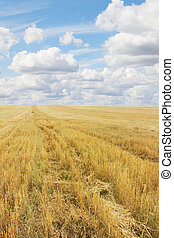 Wheat field after harvesting
