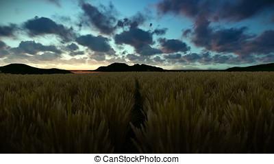 Wheat field against beautiful timelapse sunrise