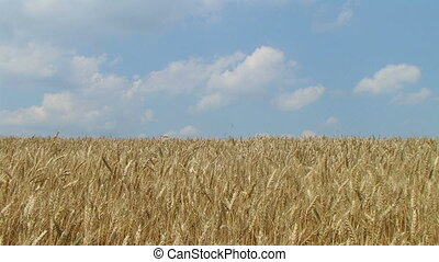 Wheat Field Against Sky 02