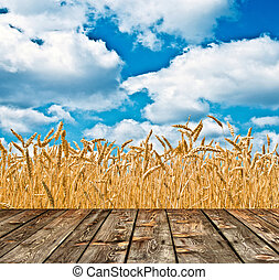 Wheat field and blue sky above wood floor