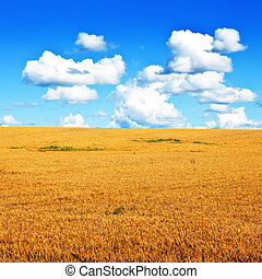 Wheat field and blye sky minimalistic landscape