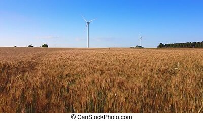 Wheat field and wind energy turbines in the background. Drone aerial view