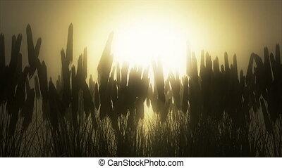 Wheat field at dawn. - The sun peaks through the silhouette...